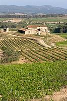 Vineyards and ´masia´ (typical farmhouse) in La Múnia, Alt Penedès. Barcelona province, Catalonia. Spain
