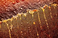 Honey. An apiary.