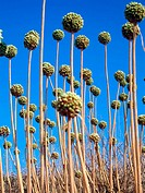 Grass. Minorca, Balearic Islands, Spain