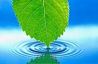 Water, Waterdrop, Water drop,