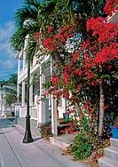 flowers on street in key west