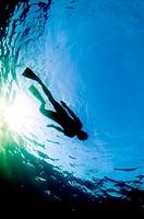 Snorkler swimming on surface. Bridgetown. Barbados