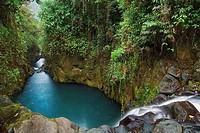 Equatorial forest. Bioko island. Equatorial Guinea.