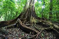 Rincon de la Vieja National Park, Guanacaste, Costa Rica