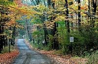 Autumn trees overhang a road, Pennsylvania, USA