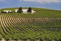 Vineyards, Jerez de la Frontera. Cadiz province, Andalucia, Spain