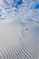 White Sands National Monument, New Mexico, USA. White gypsum sand dunes & footprints