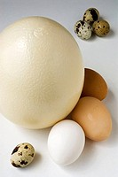 Ostrich eggs, chicken and quail