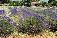 Region of Provence