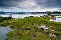 Santoña marshes, Cantabria. Spain.