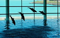 Dolphins´ show in aquarium