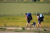 , Pilgrims to Santiago de Compostela, helping their dog