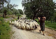 Shepherds-and-sheeps