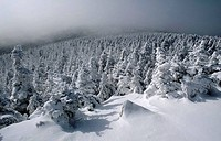 Snow-covered-trees