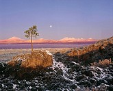 Moonset at Sunrise over Cascade Mountains, Newberry National Volcanic Monument:  Deschutes National Forest, Oregon, U.S.A.