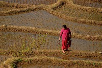 Woman in rice field, Langtang, Nepal