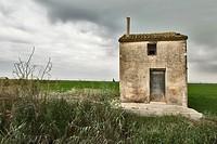 Rice fields, La Albufera Natural Park, Valencia province, Comunidad Valenciana, Spain