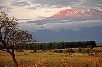 Sunset landscape with trees and Mount Kilimanjaro, Amboseli National Park, Kenya