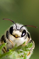 Bee, Evora, Portugal