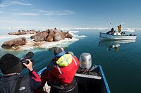 Arctic July 10 - 20 2010 Hall Beach, Foxe basin,Nunavut, Canadian High Arctic, Canada Arctic Kingdom walrus expedition  Tourists shooting video and ph...
