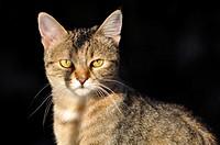 Young cat. Verucchio, Rimini, Italy