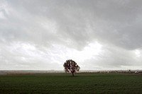 A lone tree on a grassy field as a storm approacehs