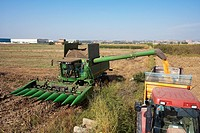 Combine-harvester unloading corn into a tow