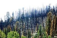 Las Conchas forest fire damage