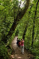 Group of hikers watching wildlife along a trail in the Monteverde Cloud Forest Reserve, Costa Rica