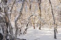 Peredovoe  Crimea  Ukraine Wood