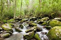 Mountain stream along Kephart Trail, Great Smoky Mountains National Park, North Carolina, United States