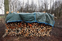 Firewood protected against rain, The Netherlands