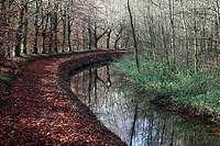 Stream, The Netherlands