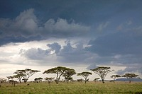 savannah with upcoming thunderstorm, Serengeti National Park, Tanzania