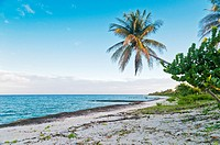 Beach with coconut. National Park and Biosphere Reserve Guanahacabibes. Pinar del Rio Cuba