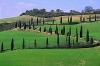 Val d´Orcia, near Pienza, Siena, Tuscany, Italy