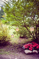 Lights in the garden