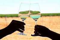 Bodega taste room and cups of verdejo wine in Rueda, Castile and León, Spain