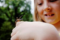 Young girl handling and admiring a large insect, Rhyssa persuasoria, Wales