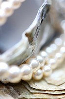 of the sea oyster shells and pearls