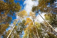Autumn foliage, Finland