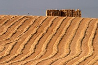Harvested wheat field, Pamplona, Navarre, Spain.