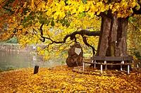 Autumn scene in Hannover Münden Germany.
