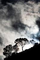 Silhouettes of a trees near Royo Odrea, Albacete province, Spain.