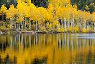 Fall has arrived at Kolob Terrace near Zion National Park, Utah.