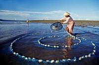 net fishing of alvines, Sumba island, Lesser Sunda Islands, Republic of Indonesia, Southeast Asia and Oceania.