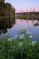 A full moon rising at sunset over a marshy lake near Bala in Muskoka, Ontario, Canada.