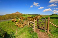 Gate and path towards Roseberry Topping, North Yorkshire, North York Moors National Park, England, UK.