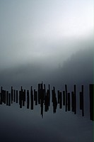 Wooden pilings reflected in still water on a foggy morning, Todd Inlet, British Columbia, Canada