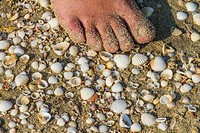 The beautiful Pounta beach is full of tiny shells. Neapolis, Laconia, Greece.